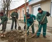 В Харькове позеленеет улица Коцарская