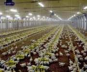 Харьковская птицефабрика заплатит за незаконное пользование землей