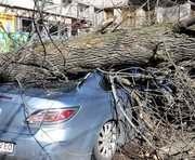 В Харькове упавшие деревья повредили несколько машин