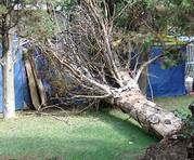 Сильный ветер повалил в Харькове 16 деревьев