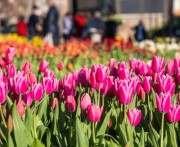В Харькове проходит выставка тюльпанов
