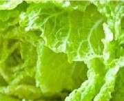 Полезные свойства пекинской капусты