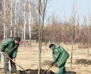 Возле модульного городка для переселенцев высадили деревья