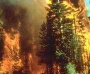 Площадь лесных пожаров в Сибири за сутки увеличилась в четыре раза