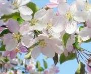 Синоптик: весна в Украине начнется завтра