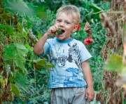Дожди и овощи: весна обещает хороший урожай на Харьковщине