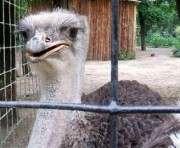 Харьковский зоопарк открывает сезон