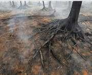 В чернобыльских лесах не осталось открытых очагов возгораний