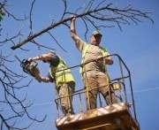 Скандал на обе ваши улицы: в Харькове побили пильщиков деревьев