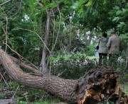 В Харькове сильный ветер выкорчевал деревья