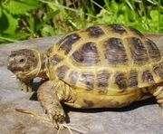 В Харьковском зоопарке отметят День рождения Черепахи Тортиллы