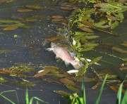 Загрязнение реки Мерла: ищут виновных