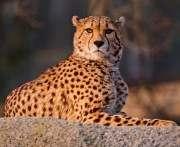 Экзотических кошек в зоопарке ждет супервольер