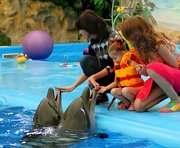 Дети из зоны боевых действий посетили харьковский дельфинарий
