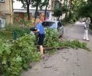 В Харькове на женщину и ребенка упало дерево