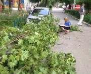 Дерево, упавшее на маму и ребенка в Харькове, не было аварийным