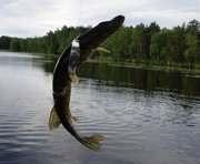 В Харьковской области рыболовам устроили соревнования