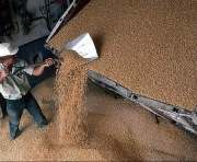 В Харьковской области собрали миллион тонн зерна