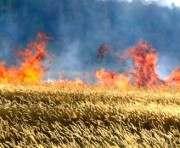 В Харьковской области едва не сгорело пшеничное поле