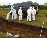 В Харьковской области готовятся к наступлению африканской чумы