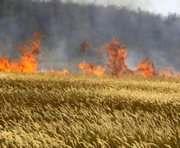 В Харьковской области подожгли пшеничное поле