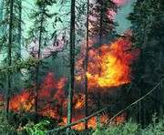 В Харьковской области едва не сгорел хвойный лес