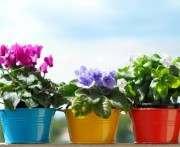 В Харькове открылась цветочная выставка