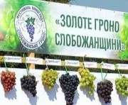 В Чугуеве прошел фестиваль «Золоте гроно Слобожанщини»: видео-факт