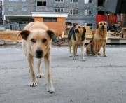Харьков грозятся наводнить бездомными собаками из Мелитополя