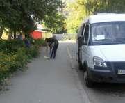 В Харькове идет отлов кошек: фото-факт
