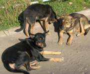 Станет ли в Харькове больше бездомных собак