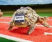 Книга рекордов Гиннесса рассказала о самой быстрой в мире черепахе