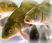 На Харьковщине «повязали» рыбного браконьера