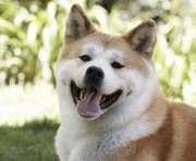 Американцы разработали устройство для селфи с собаками