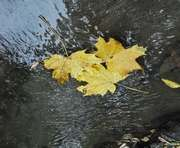 Погода в Харькове: небо осенью задышало