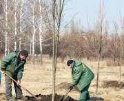 Где и за сколько в Харькове посадят деревья