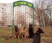 В харьковском городском приюте открыли площадку для тренировки собак