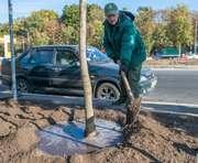 В Харькове начали высадку деревьев на Московском проспекте