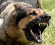 Что грозит владельцам бешеных животных