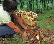 В Крыму вводят налог на сбор грибов и ягод