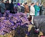 В Харькове свирепствуют «гречкосеи»