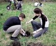 В Харькове завершается сезон посадки деревьев