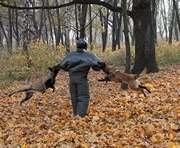 Собаки харьковской колонии демонстрируют каскадерские способности