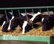 В Китае построят завод по клонированию животных