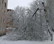 Куда харьковчане могут сообщить об упавших деревьях