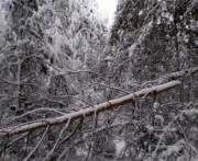 Из-за снегопада в Харькове упало более полутысячи деревьев