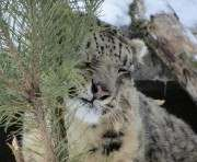 Харьковский зоопарк спасает елочки от гибели
