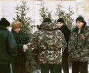 В Харькове продают липовые елки
