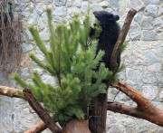 Медведям в харьковском зоопарке поставили елку