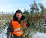 Харьковским лесхозам не разрешили продавать елки